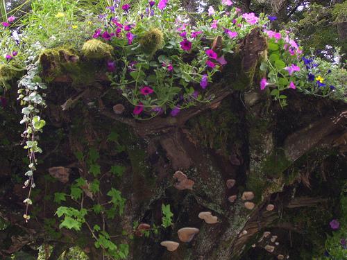 alaska-gardens-1