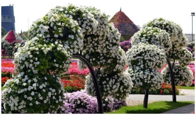 dubai-garden6 - Copy