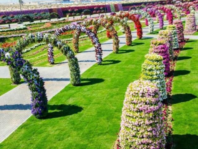 Dubai Miracle Garden 4 - Copy