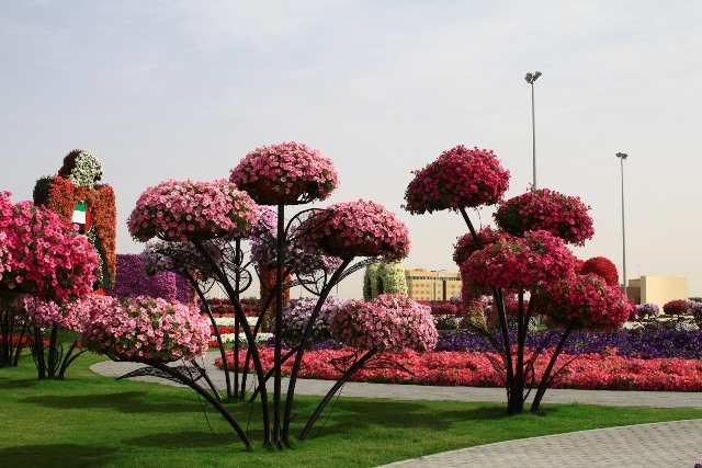 Dubai Miracle Garden - Copy