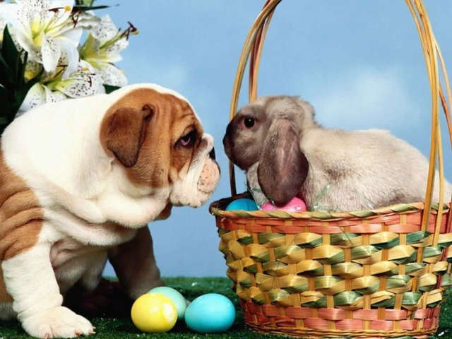 Easter-Bunny-111