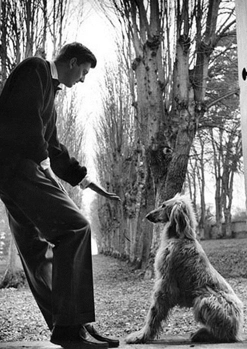 Hubert-de-Givenchy-and-his- Afghan-Hound