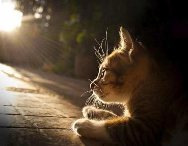 interesting_cats-1