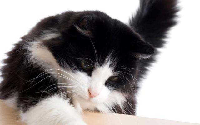 interesting_cats-11