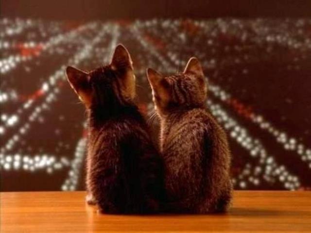 interesting_cats-13
