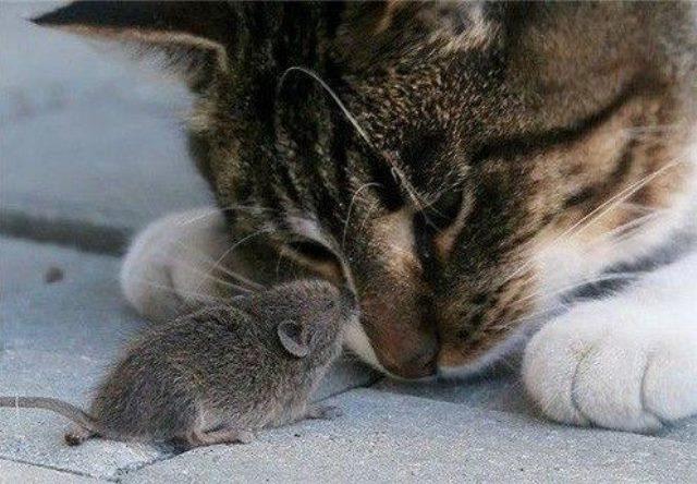 interesting_cats-16