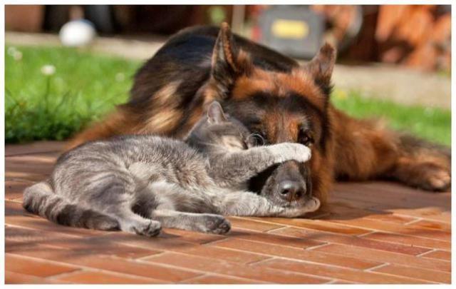 interesting_cats-17