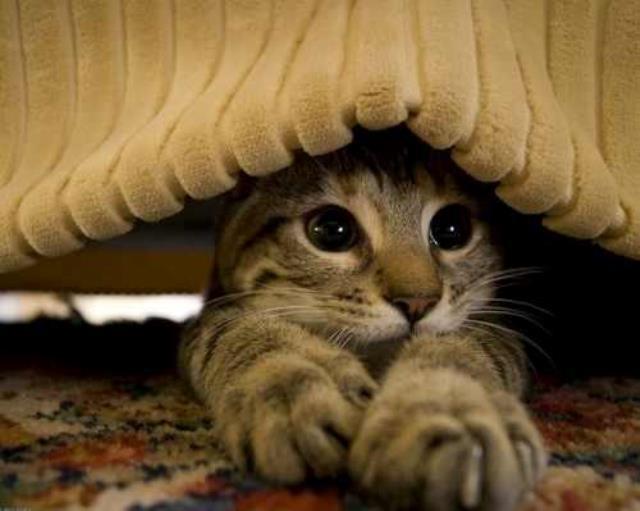 interesting_cats-2