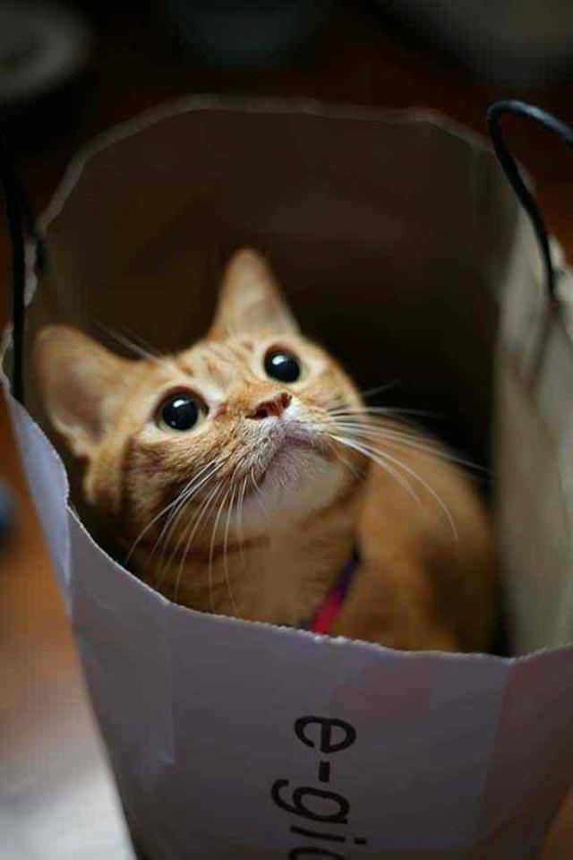 interesting_cats-4