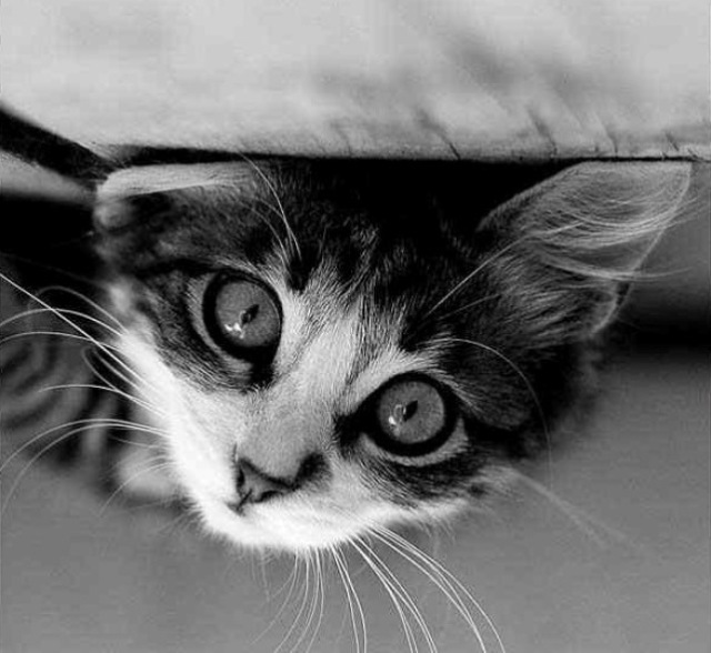 interesting_cats-6