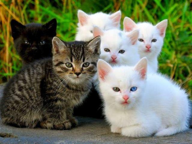 interesting_cats-7