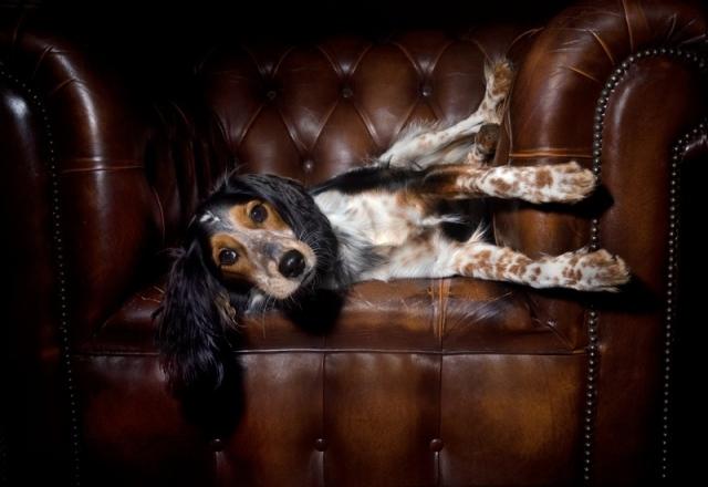 leather-furniture-care