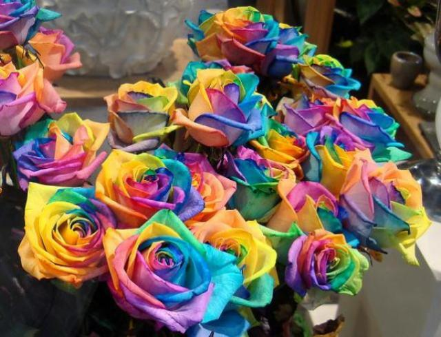 rainbowrosesfriday
