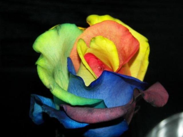 rosecloseupfriday