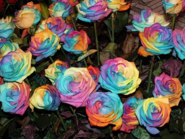 rosefarmfridaystory