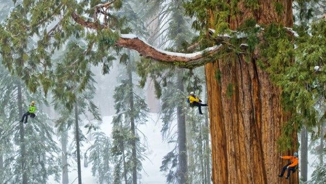 sequoia-hyp