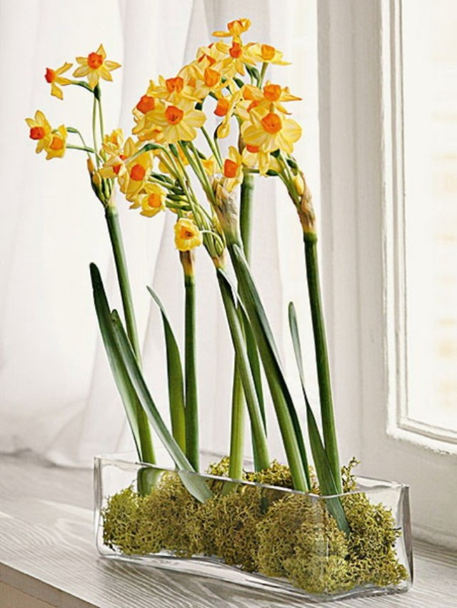 spring-flowers-new-ideas-narcissus1