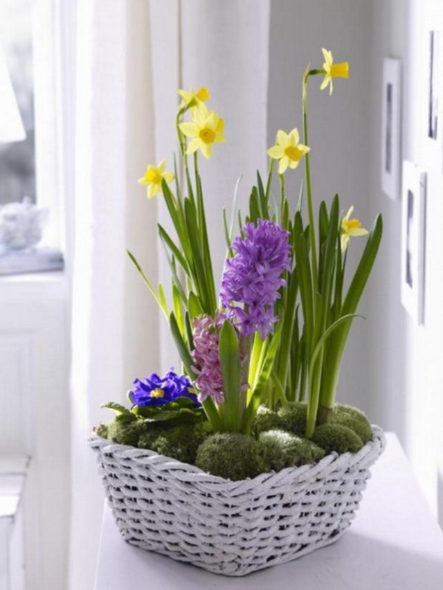 spring-flowers-new-ideas-narcissus12