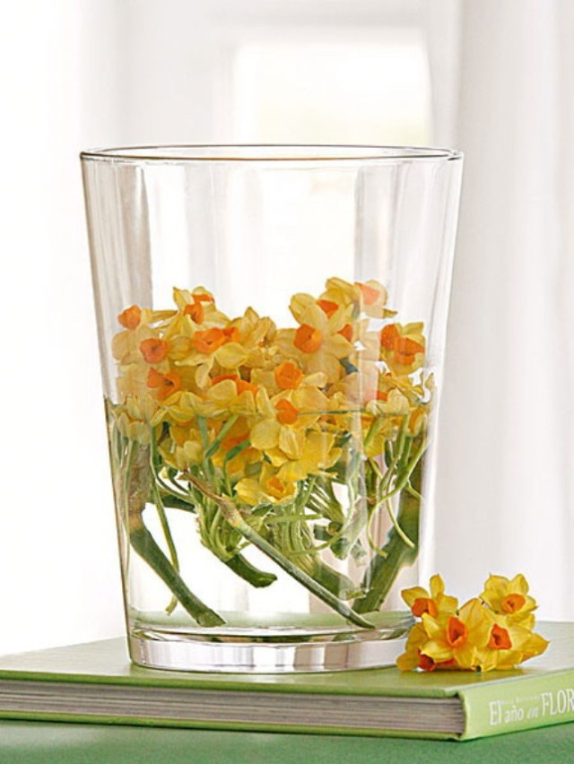 spring-flowers-new-ideas-narcissus2