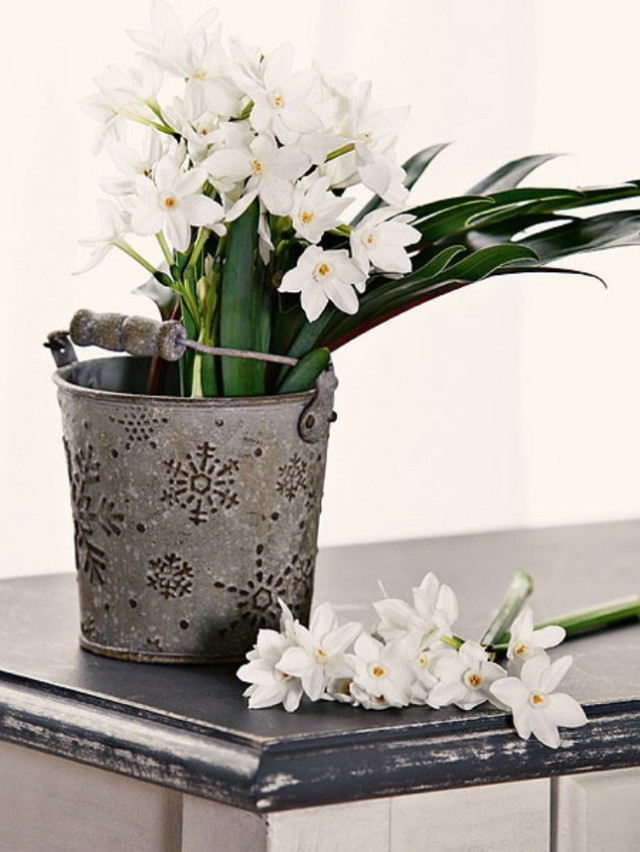 spring-flowers-new-ideas-narcissus6