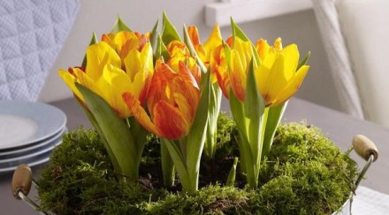 spring-flowers-new-ideas-tulip2-17