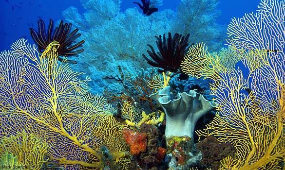 gol-coral-sea-classic-coral-585-mfk011011