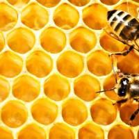თაფლი: შემადგენლობა, თვისებები, სახეობები