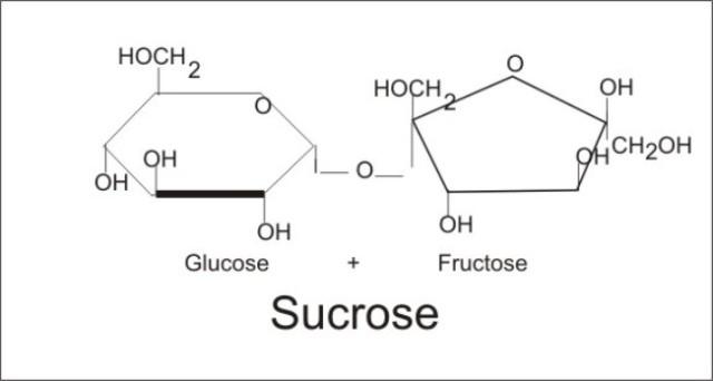 Sucrose–5