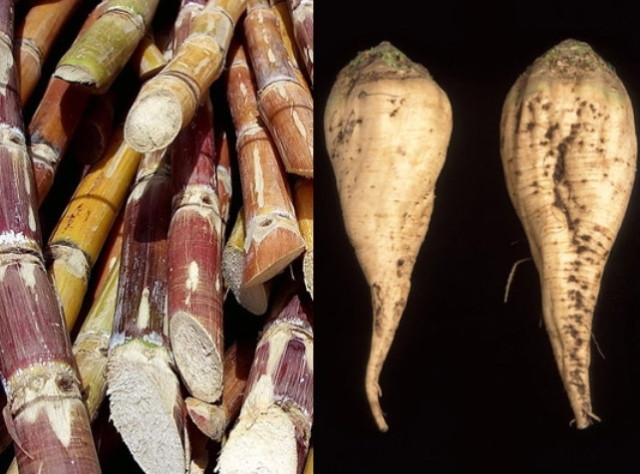 sugar-beet-cane