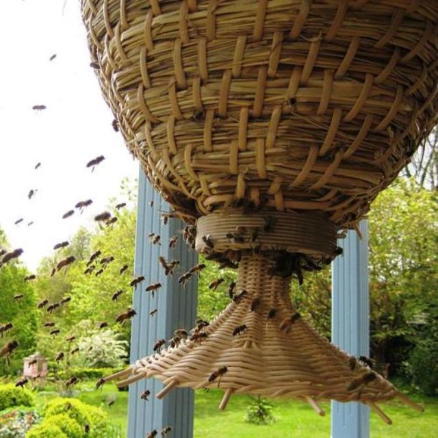 sun-hive-landing-board