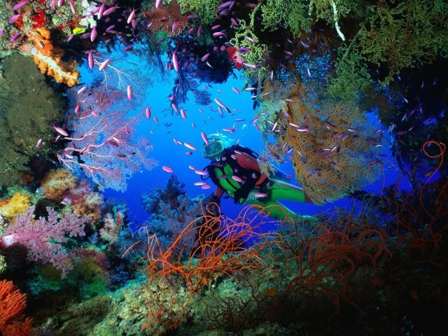 underwater-world-hd-image