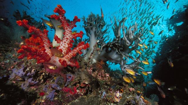 underwater-world-wallpaper_1920x1080_89716