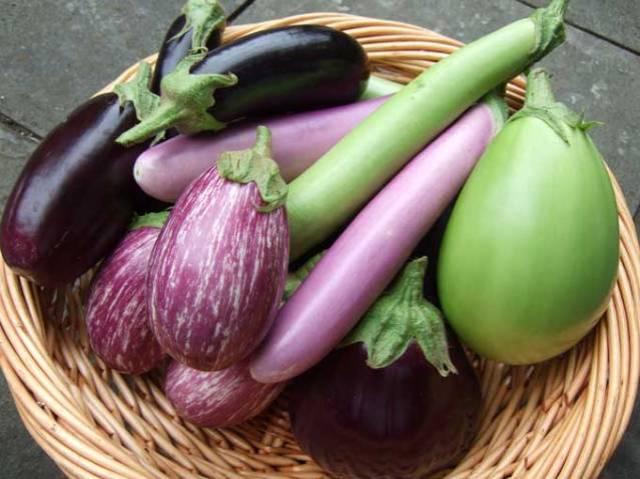 eggplant-harvest