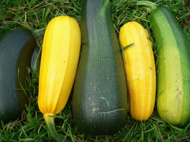 Vegetable-marrow–2
