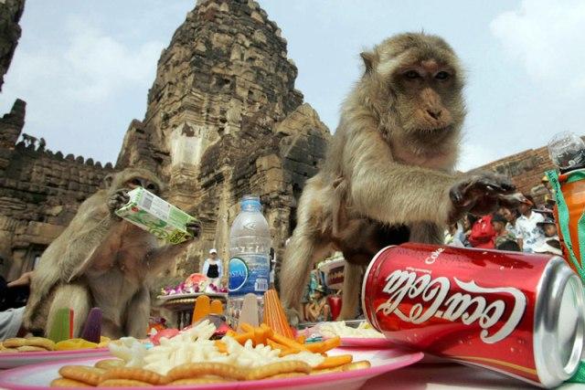 monkey-fest-1