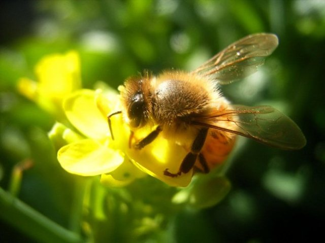 recognize-good-honey-7