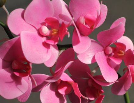 orchid-9