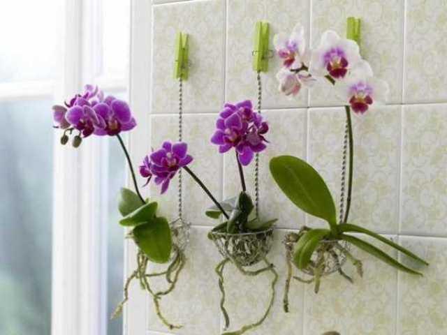 Flowers-Decoration-18