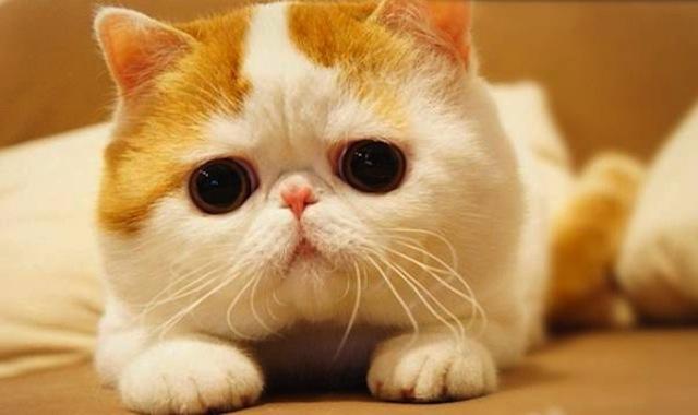 CUTEST=CAT