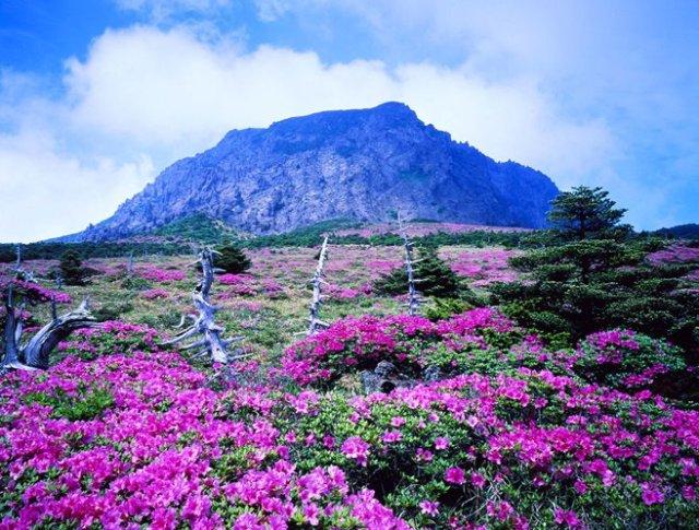 Jeju-Island8