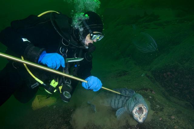 underwater-hunting-2