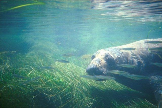underwater-hunting-5