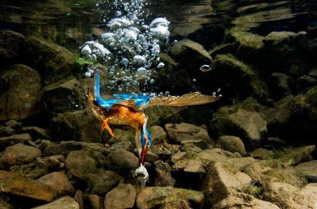 underwater-hunting-6