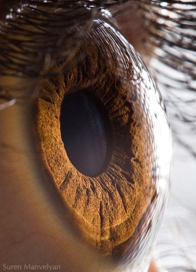 human-eye-macro-suren-manvelyan-1