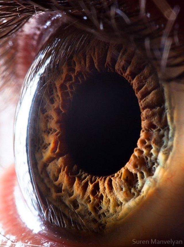 human-eye-macro-suren-manvelyan-12