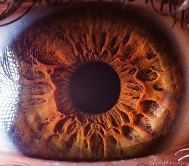 human-eye-macro-suren-manvelyan-13