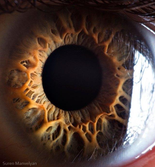human-eye-macro-suren-manvelyan-15