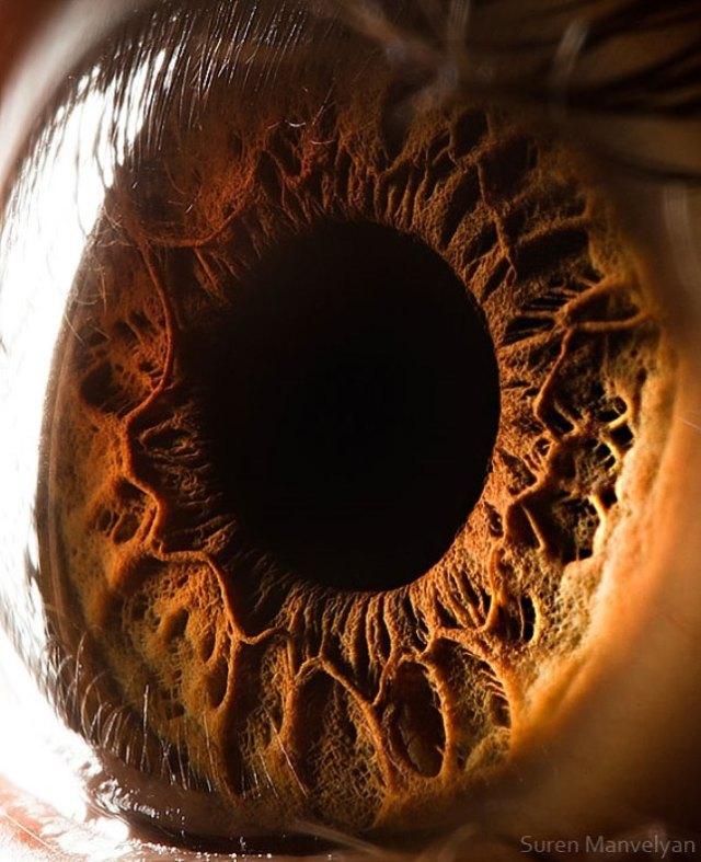 human-eye-macro-suren-manvelyan-17