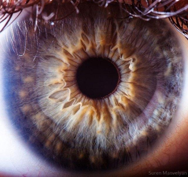 human-eye-macro-suren-manvelyan-18