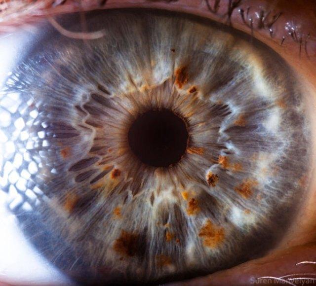 human-eye-macro-suren-manvelyan-21